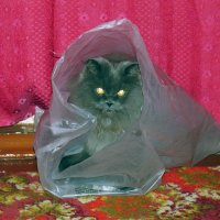 Кот в мешке. :: Руслан 1111