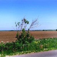 Широко поля пораскинулись... :: Самохвалова Зинаида