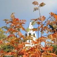 Сквозь рябиновые листья.... :: nika555nika Ирина