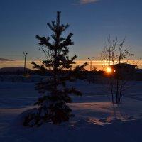 Долгожданное солнце :: Ольга