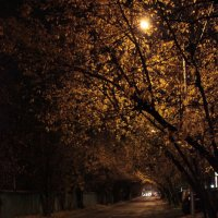 Прогулка у дороги :: Андрей Сорокин