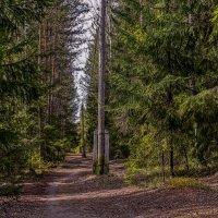 дорожка вдоль столбов :: gribushko грибушко Николай