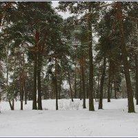 Пасмурный зимний день в лесу. :: Роланд Дубровский