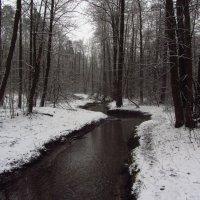 Еще - из прошлой зимы (1) :: Андрей Лукьянов