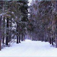 В зимнем лесу :: Татьяна Ломтева