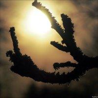 Дракон пожирающий Солнце :: Swetlana V