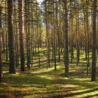 Игра света и тени. :: Дмитрий Постников