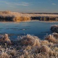 Зима :: Николай Гришин