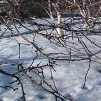 Зимний сад :: super-krokus.tur ( Наталья )
