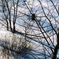 Снег в феврале :: Елена Федотова