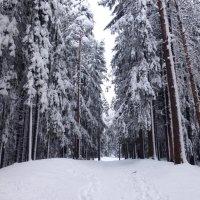 Зимняя дорога :: Елена Грошева