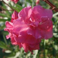 Южные цветы :: nika555nika Ирина