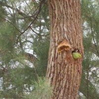 Попугаиха драра высиживает птенцов :: Герович Лилия