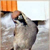 бравый парень :: linnud