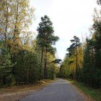 Дорога вдоль Ладожского озера :: Елена Павлова (Смолова)