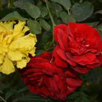Красота в красках :: Оксана Провоторова