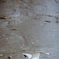 Чайка :: Alex Bush
