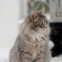 Коша наслаждается :: Михаил Тищенко