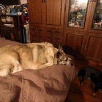 Любимая собака. :: Сергей