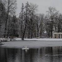Парк Александрия :: Андрей Афанасьев