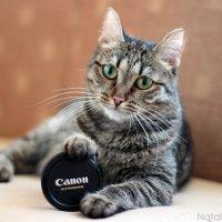 Кошка и Canon. :: Наталья Бугримова