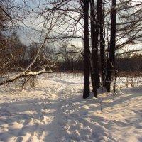 IMG_1986 - Снова зима настоящая :: Андрей Лукьянов