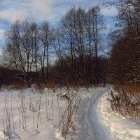 IMG_2002 - Снова зима настоящая :: Андрей Лукьянов