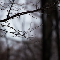 меланхолия на меланхолии :: Екатерина Сергеева
