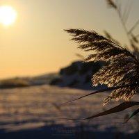 Зимний закат. :: Сергей Бутусов