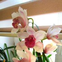 орхидея :: Александр Корчемный