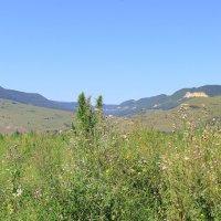 Предгорья Северного Кавказа :: Vladimir 070549