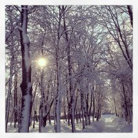 зимнее утро :: Мария Корнилова