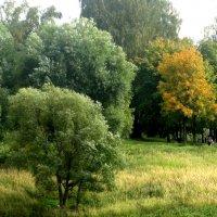 Деревья в парке :: Елена Семигина