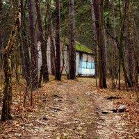 Вилла в лесу :: Дмитрий Близнюченко