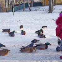 В парке. :: Ирина Нафаня