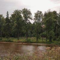 Там, на том берегу :: Светлана Лысенко