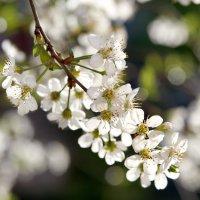 Весна :: Александр Мясников