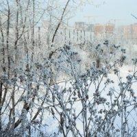 Зима :: Андрей Баськов