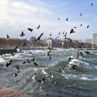Берег взволнованных птиц :: Константин Николаенко