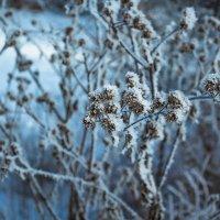 Зимняя природа :: Андрей Баськов
