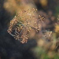Сентябрь... :: Irina Polkova
