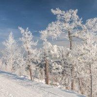 frosty day :: Dmitry Ozersky