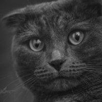 Кошка :: Андрей Дыдыкин