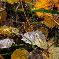 слезы осени :: Galina