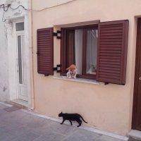 Кошка и собака :: Ольга П
