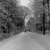 Зимний парк :: Ольга Васильева