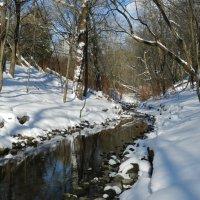 Прогулка вдоль ручья в городском парке (High Park, Toronto) :: Юрий Поляков