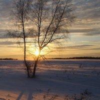 В поле :: Евгения Каравашкина