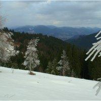 Березовый вальс на горном склоне :: Svetlana Kravchenko