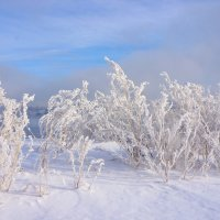 зимние травы :: Галина Подлопушная